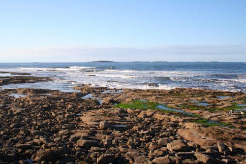 The Farne Islands, accessed by Seahouses harbour boats