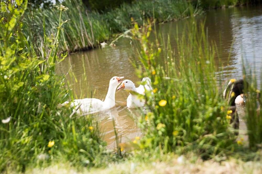 The gorgeous Farmhouse has views out to the garden and the pond where the ducks dabble