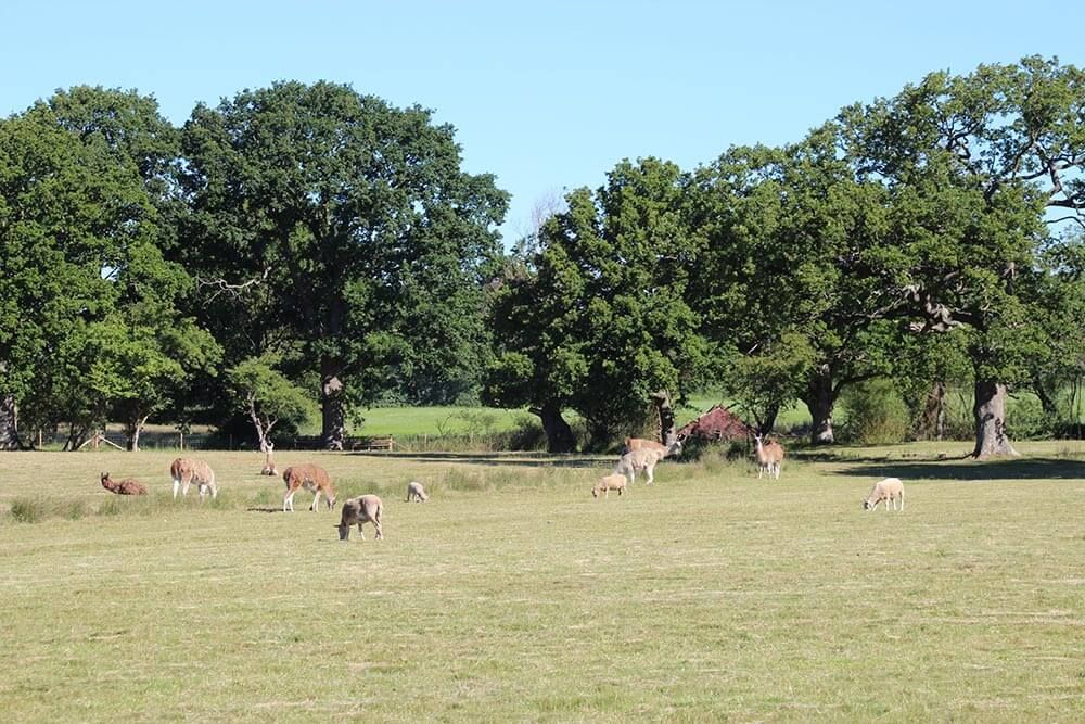 The Reindeer Centre is right next door to the Farm