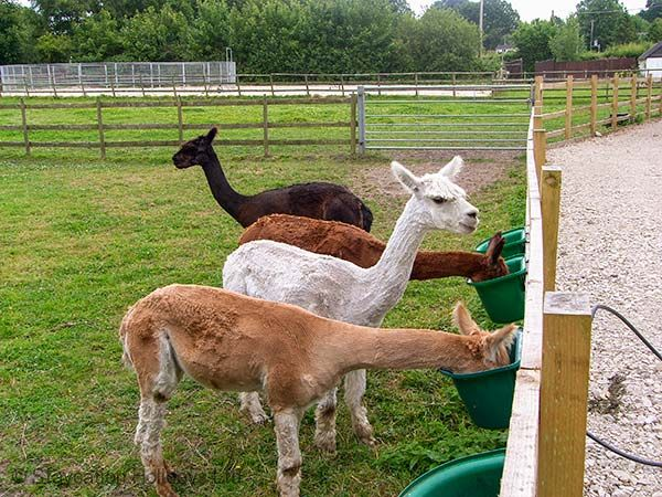 The owner now runs a 7.5 acre equestrian and alpaca smallholding on-site
