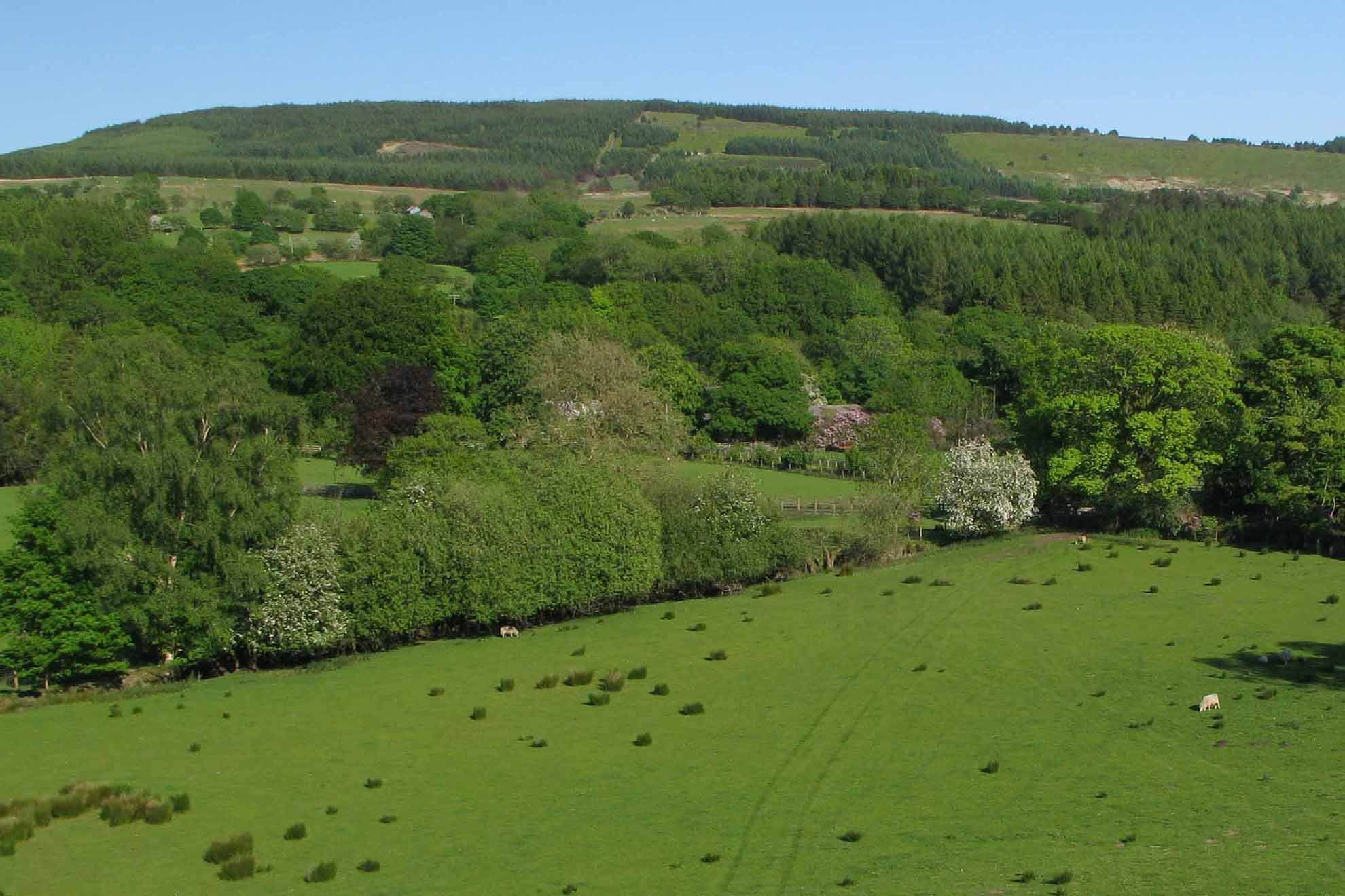 The holiday cottages are located just to the left of the flowering Rhododendron