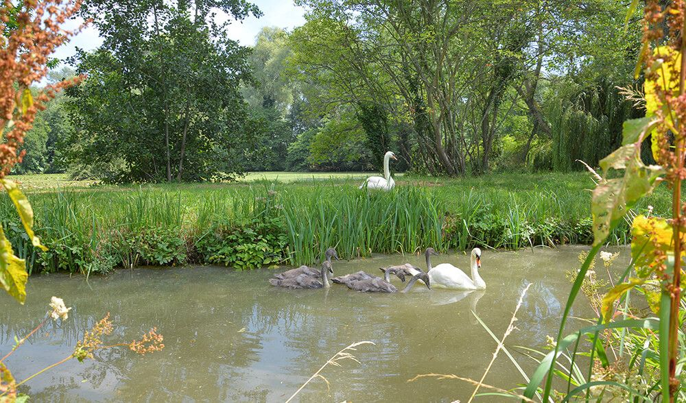 Walk by the stream in the beautiful setting with wonderfully kept gardens
