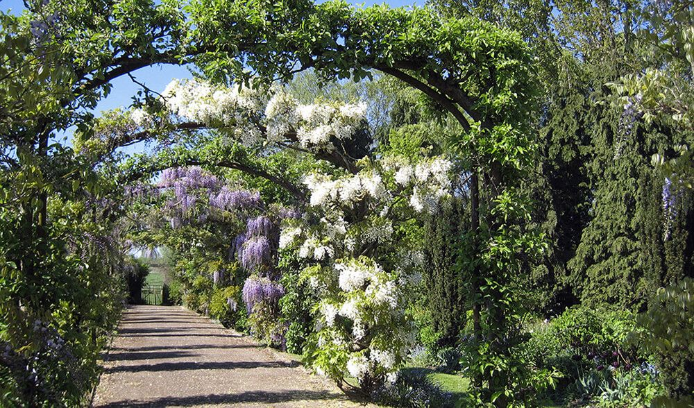 A tunnel of wisteria and apple trees, trained on arches, run the length of the garden
