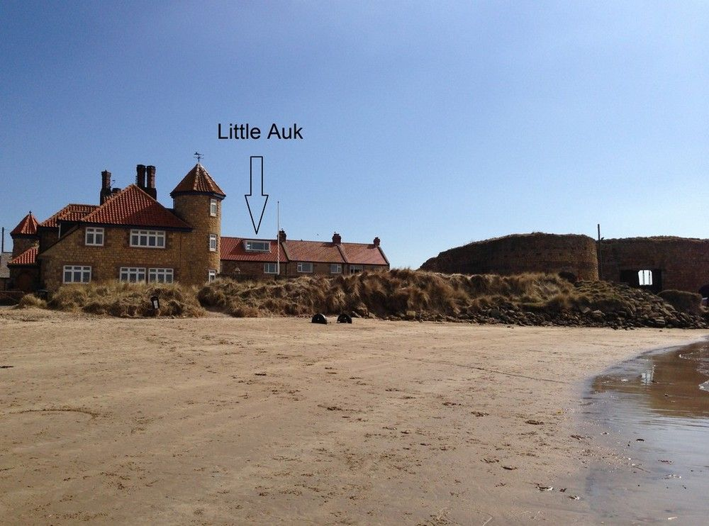 Little Auk | Beadnell | Northumbria Coast & Country ...