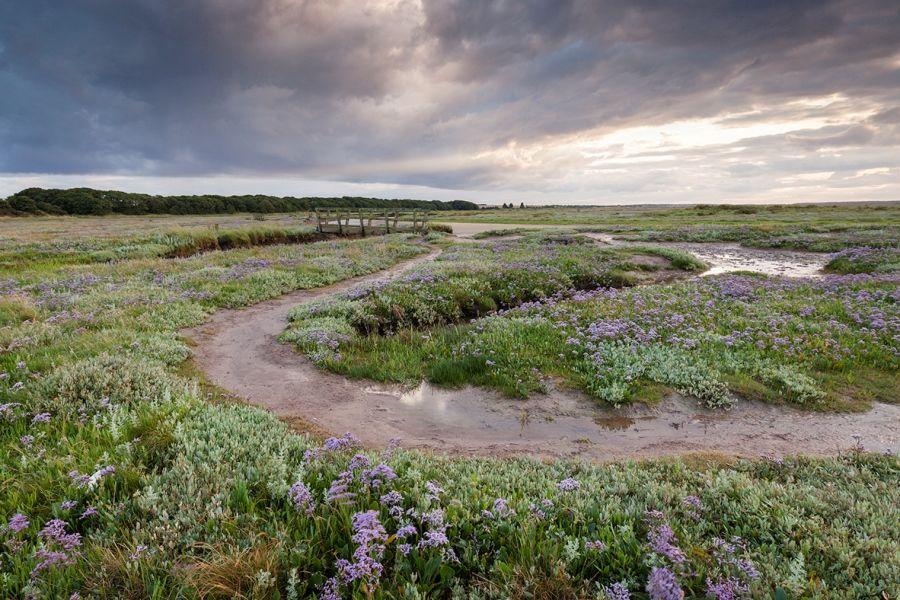 Fox Cottage   Stiffkey marshes