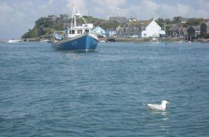 Anchor Haven