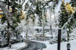 Duchally Estate -  Winter Wonderland road to Duck Pond Lodge