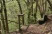 Yr Hufenfa Capel Dewi, Ceredigion  - Woodland walk
