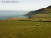Join the Pembrokeshire Coastal Path 3 fields away from Ysgubor holiday cottage in St Davids