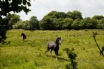 Holiday Cottage in South Wales - guests can help to feed the horses