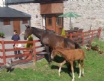 Meet the farm animals at Maes y Gwy self catering, Monmouthshire