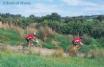 Mountain biking in Llanwrtyd Wells