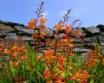 An Rhubha Cottage Easdale Island Scotland - flowers