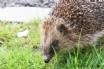 Wildlife abounds in Devon