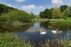 Pitcairlie House lake with swans & Fish