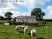 Your only neighbours are the pet sheep in the field next door...